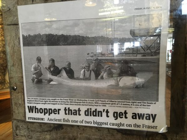 newspaper article clipping on sturgeon fishing