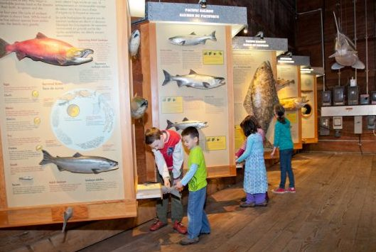 children playing at the Gulf of Georgia Cannery fish wall display